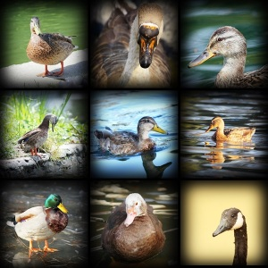 collection of images with water birds