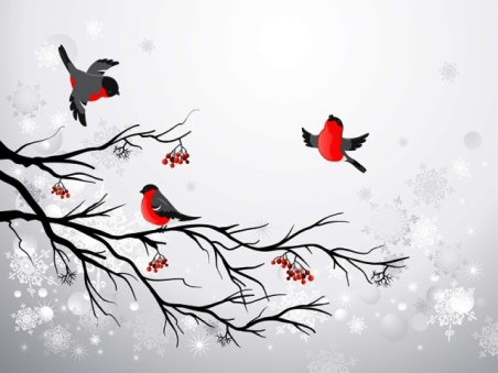 Branch and birds bullfinch