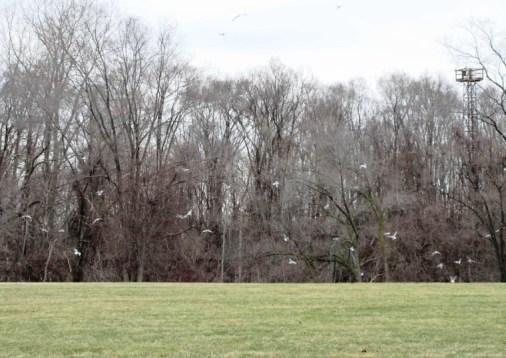 Gulls 03-19-17