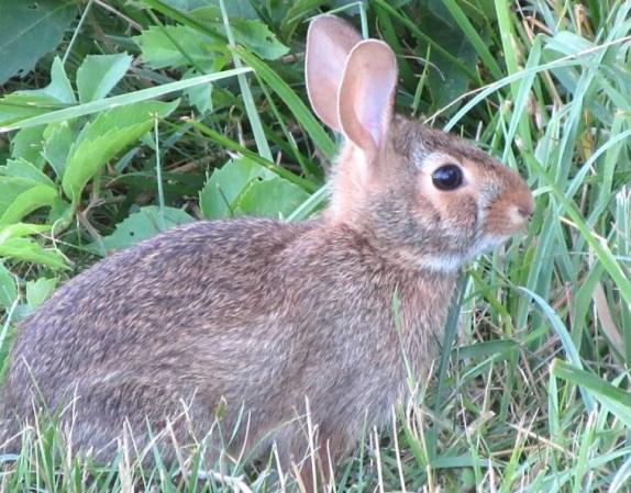 08-25-17 Bunny Fur.jpg