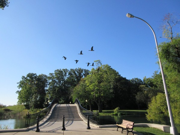 A-header Geese Overhead