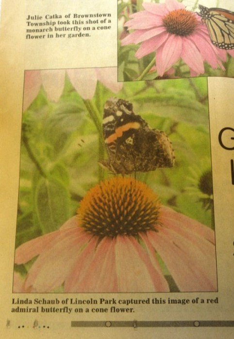 Butterfly in newspaper