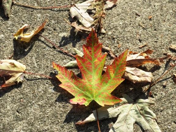 crumpled leaves