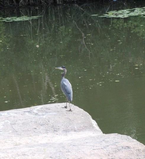 Heron #2
