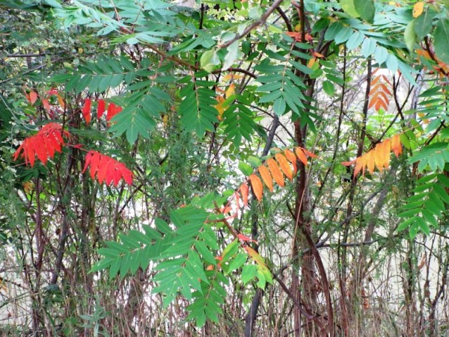 red weeds