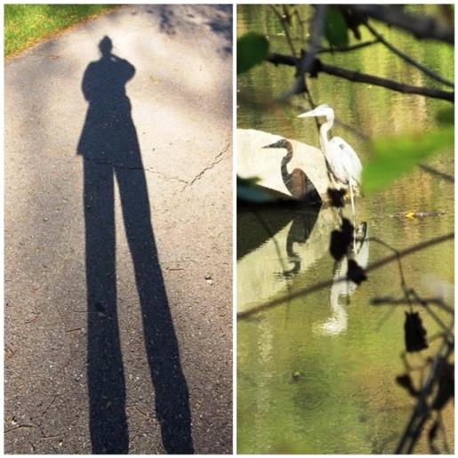 10-26-17 shadow