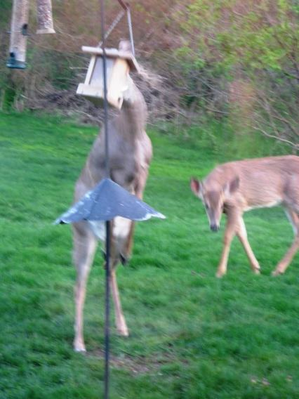 Attacking the feeder