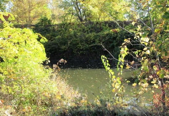 Leaves on Ecorse Creek.jpg