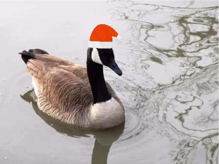 goose with cap