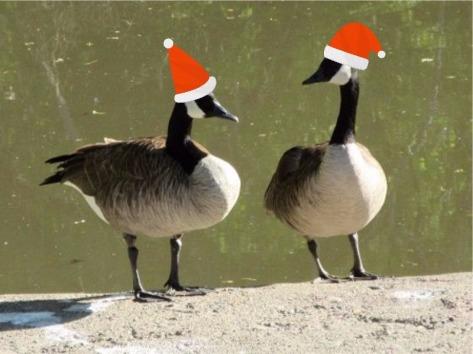 pair of ducks with santa capse