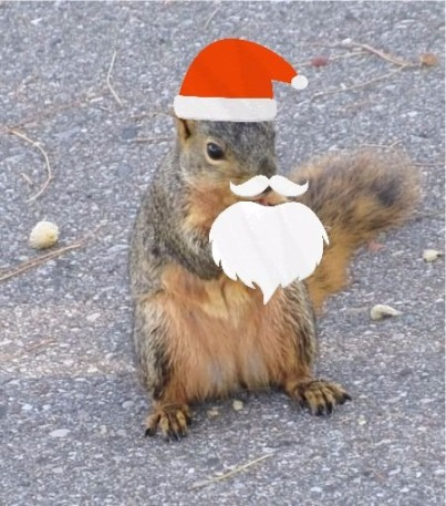 squirrel who looks like santa with beard
