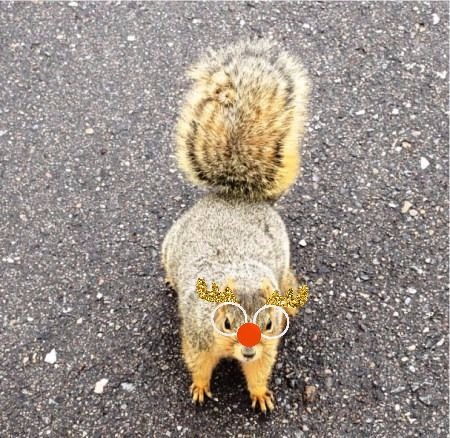 squirrel with reindeer antlers