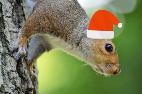 squirrel with santa capb