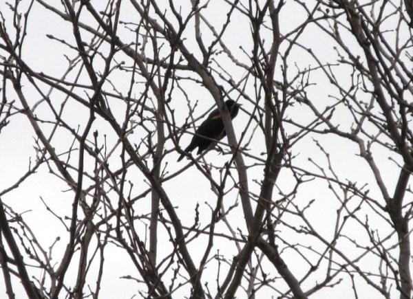 Bird in tree1