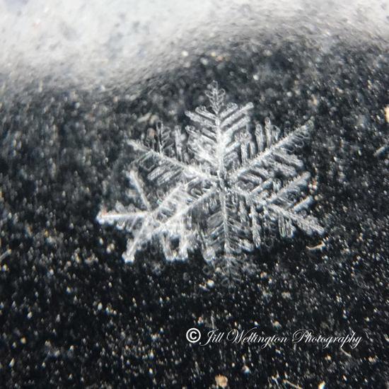 JILL SNOWFLAKE