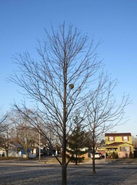 SMALL TREE