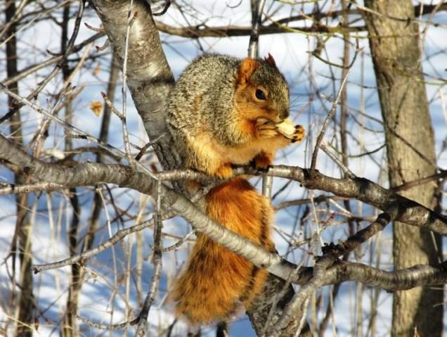 Parker noshin' nuts