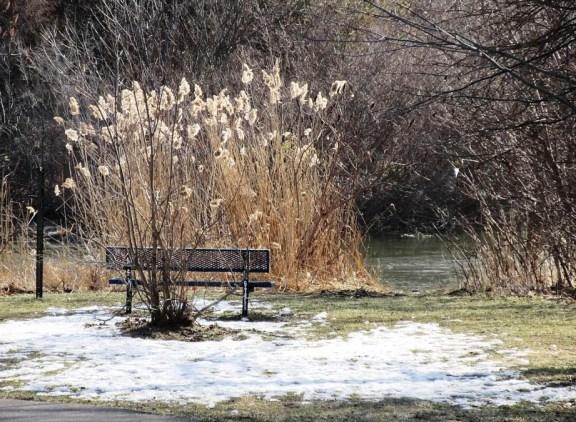 2-snow from swan.jpg