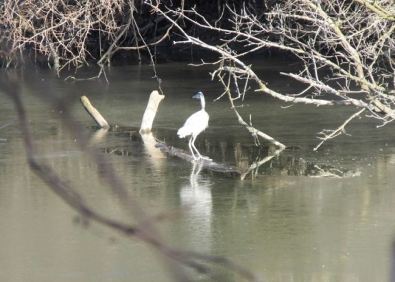 3-heron turns around