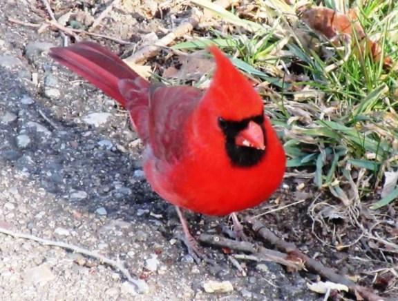 cardinal - header
