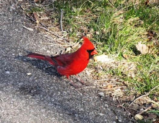 cardinal00