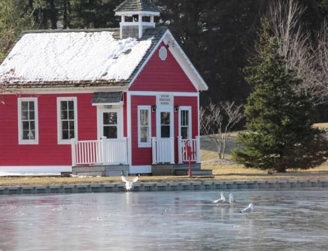gulls in front of red schoolhouse