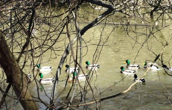 left ducks.jpg
