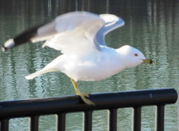 seagull freaking out