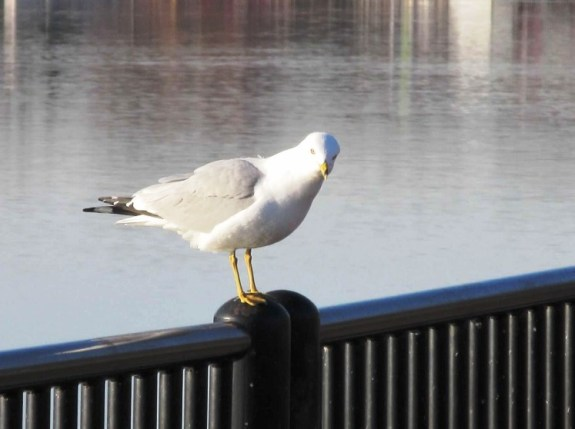 seagull what you want