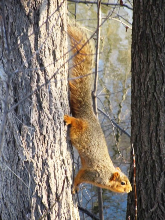 squirrel-do i smell peanuts