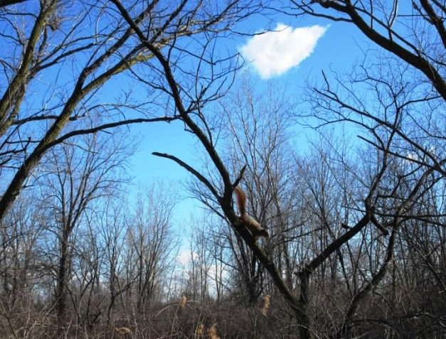 tree and squirrel in sky