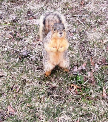 FINAL SQUIRREL