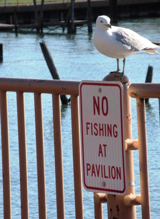 NO FISHING AT PAVILION.jpg