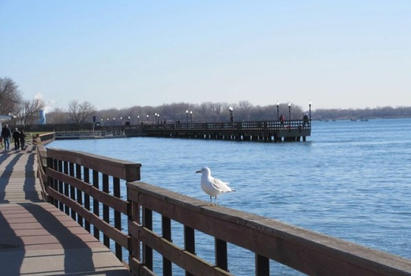 PIER AND GULL