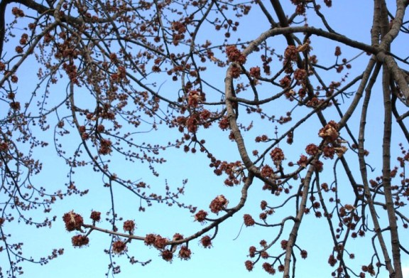 TREE BUDSY.jpg