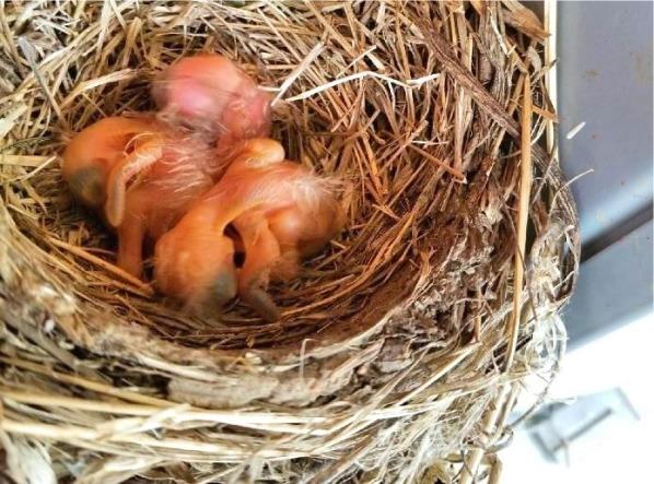 05-05 three babies
