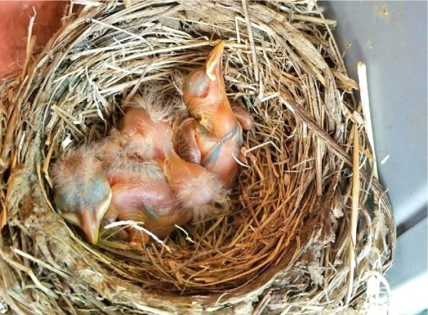 05-07 three babies