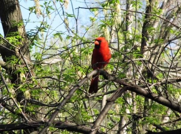 Cardinal with Nate.jpg