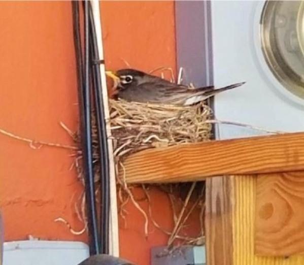Mama on nest.jpg