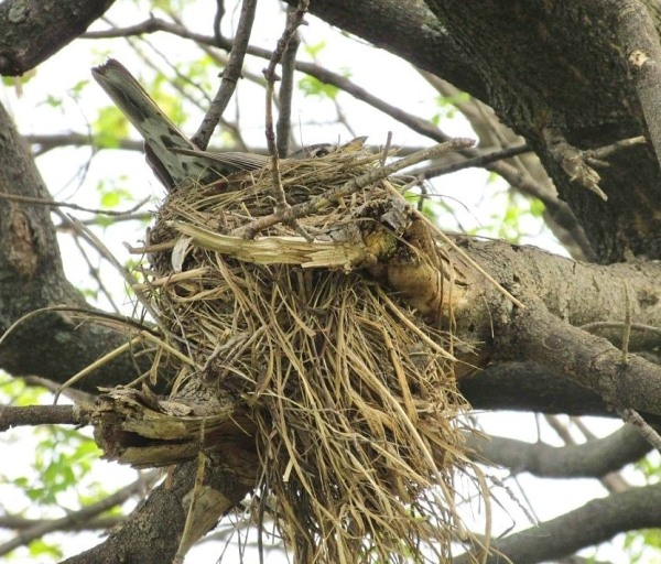 nest robin fixings.jpg