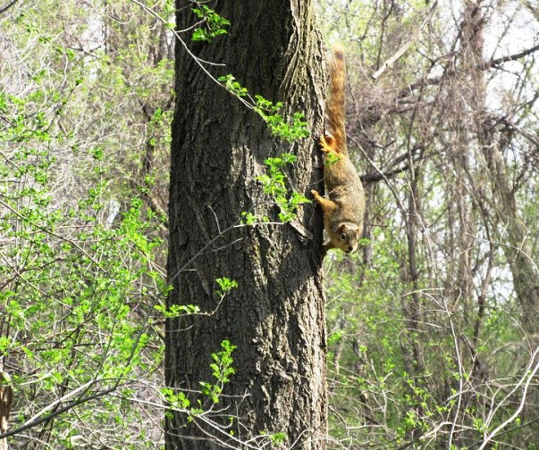 OTHER SQUIRRELS ARRIVE
