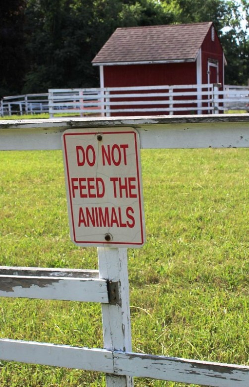 dont feed the animals.jpg
