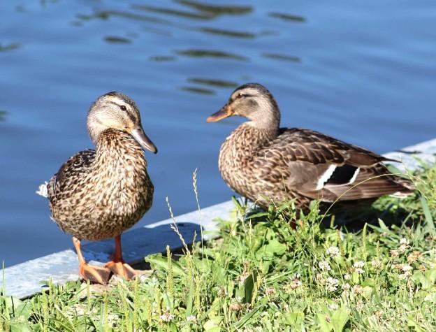 feeling ducky.jpg