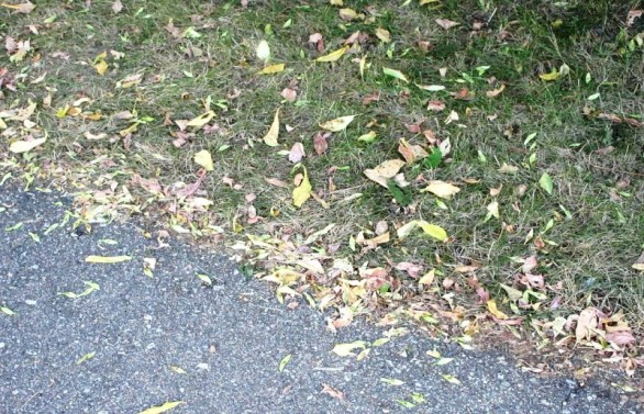 LEAVES ON PATHWAY.jpg