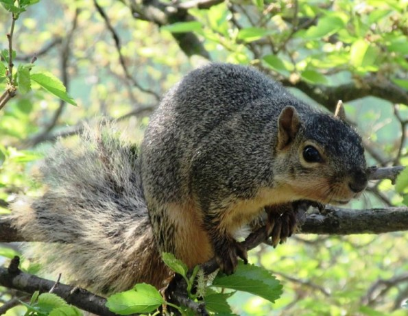 SQUIRREL CHECKING ME OUT