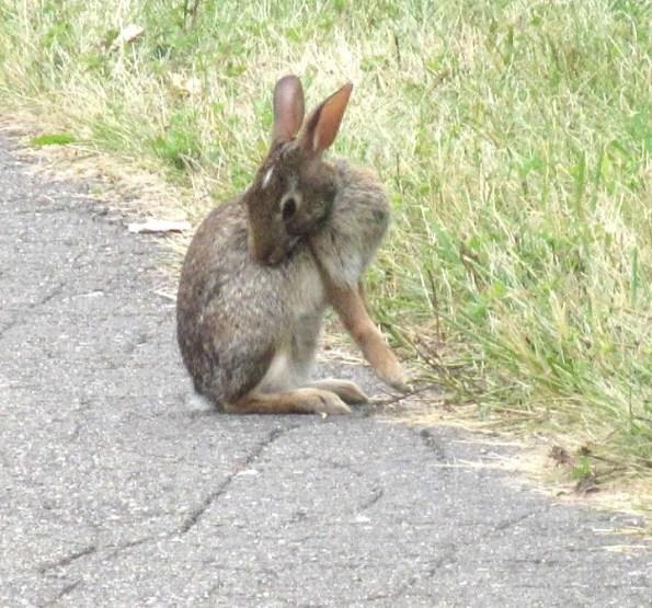 Tall bunny bending backward.jpg