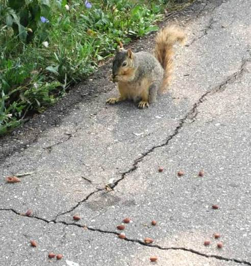 so many nuts and so little time