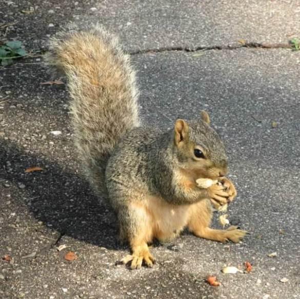 Squirrel Sitting on Path.jpg