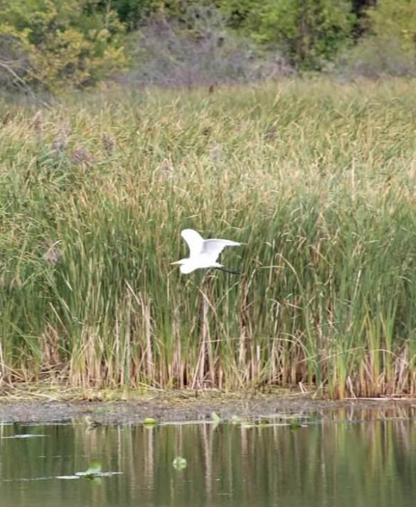 in marsh1.jpg