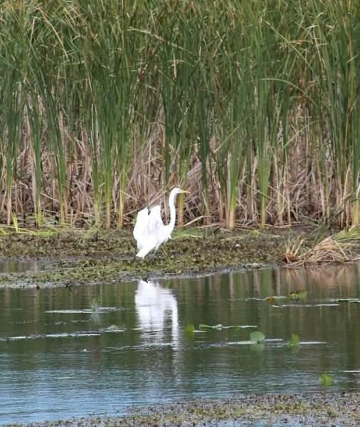 in marsh2